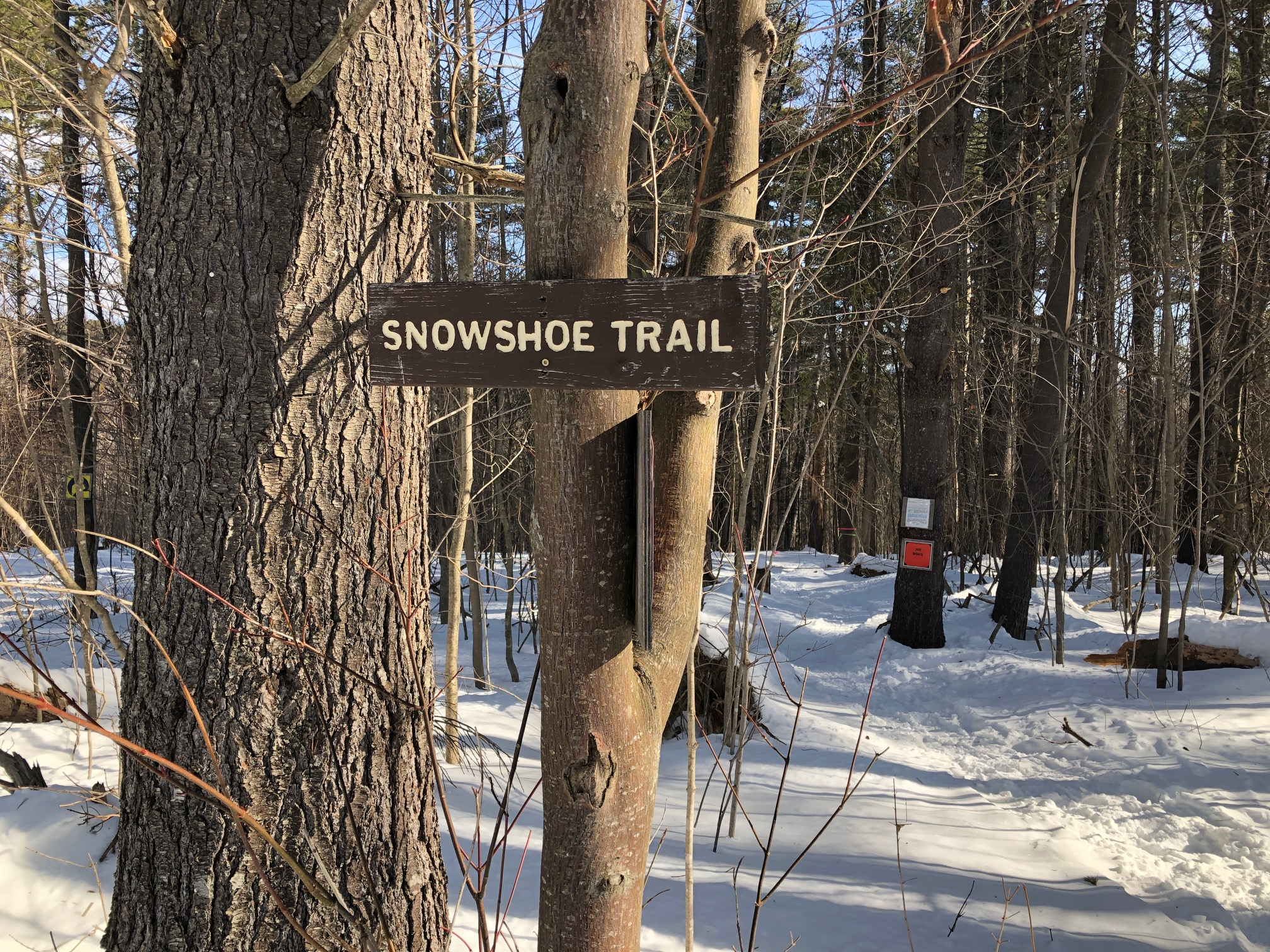 I can't say enough nice things about the snowshoe trail network at Mt. Blue State Park.