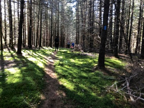 mossy section of single track