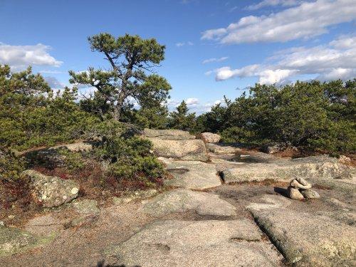Weatherbeaten pines on granite ledge.