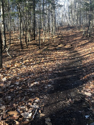 Someone had meticulously leaf-blown the singletrack.