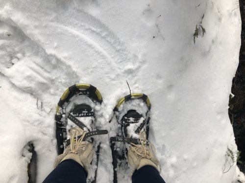 I needed a short walk on snowshoes so much more than I needed a long run!