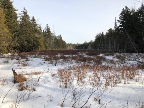 Moose Bog from the Yellow Trail.