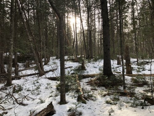 Maine's snow cover is still so thin this December. Better to snowshoe than risk skiing.