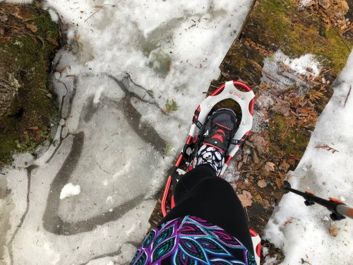 Doing what I can do. Can't run? Ski. Can't ski? Snowshoe.